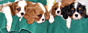g-group grace-guinevere-giselle-galahad-8weeks